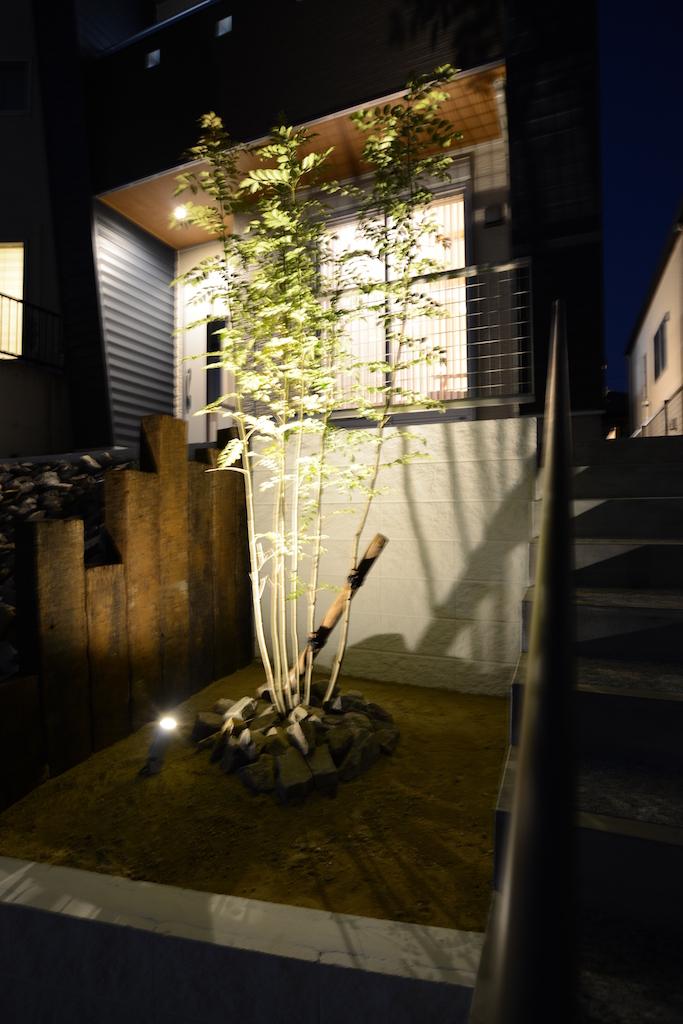 シンボルツリーのシマトネリコ